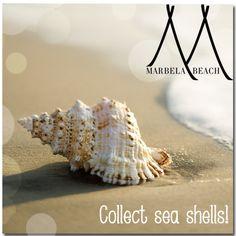 #BeachRules 5: Collect Sea Shells Beach Rules, Sea Shells, Collection, Shells, Seashells