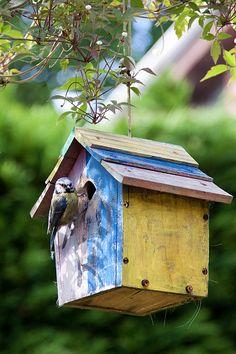 cheerful bird house