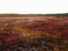 marshlands - Google Search