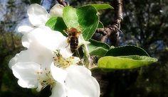 пчелка-в-мае