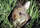 Flowering Plants That Deter Rabbits | Home Guides | SF Gate