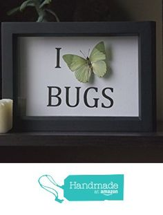 I Love Bugs - Ornate Green Butterfly - Frame Museum Display from TheButterflyBabe http://www.amazon.com/dp/B01CDXQCRQ/ref=hnd_sw_r_pi_dp_eEG3wb09PQ9TJ #handmadeatamazon