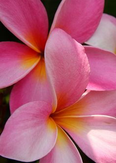 Plumeria- found these when I visited the Bahamas :) they smelled like vanilla and coconut