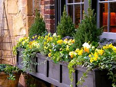 Interesting combination of evergreens, ivy and yellow violas.