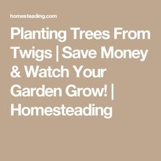 Planting Trees From Twigs   Save Money & Watch Your Garden Grow!   Homesteading