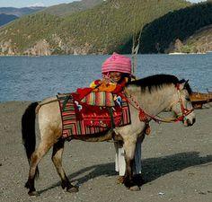 Mongolian horse & rider