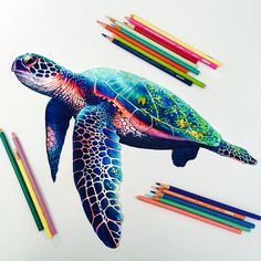 animals, art, beauty, color, design, draw, drawing, fauna, natural, paint, painting, turtle, magic&color, turtle draw