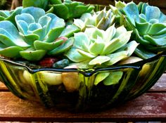 Vintage glass Potted Succulents,Sister Bloom Themed Terrariums, a division of Made-that designs