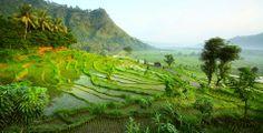 Ubud #Indonesia