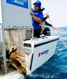 The Most Amazing Massive Animal Rescues #animal #rescue #amazing