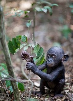 Would monkeys be a good topic for a classification essay?