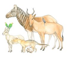 Endlings, watercolor and ink. These creatures are all the last of their kind: The last quagga, the last bubal hartebeest, Martha the passenger pigeon, Incas and Lady Jane the Carolina parakeets, Celia the Pyrenean ibex, Benjamin the thylacine, and Bryn the pygmy rabbit (of the Columbia Basin population)