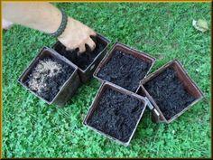 Tarım Siteniz: Domates Yetiştirme Püf Noktaları