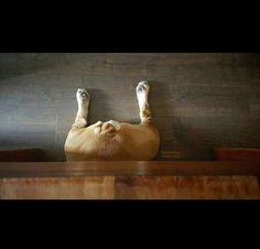 Sweetie statue? English bulldog funny Bullies