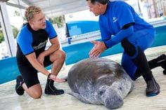 New Sat. morning TV series Sea Rescue with GMA's Sam Champion showing rescue/conservation work @ all SeaWorld Parks-should be great!