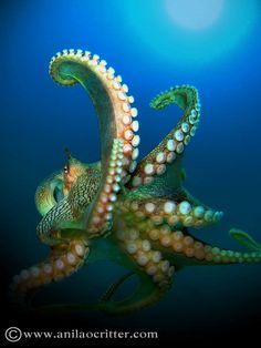 Scuba Dive in Anilao - Underwater Macro Photography, Anilao Muck dive.