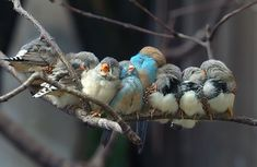I have these birds myself, they are sooooo cute!!!!