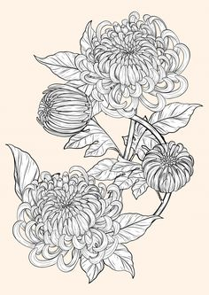 Chrysanthemum flower by hand drawing Pre... | Premium Vector #Freepik #vector #background #pattern #flower #wedding