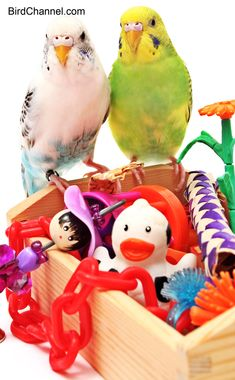 Small parrots thrive with bird toys in the cage. Find out what type of bird toys to provide them.