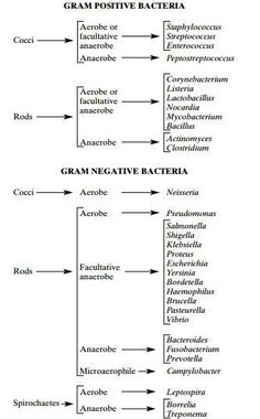 Microbiology Unknown Identification Chart Luxury 58 Recent Flow Microbiology Gram Stain Flow Chart Science Biology, Medical Science, Medical Technology, Technology Careers, Medical Coding, Teaching Biology, Life Science, Computer Science, Technology Articles