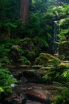 My inner landscape Mononoke Forest, Beautiful World, Beautiful Places, Landscape Photography, Nature Photography, Fantasy Landscape, Nature Scenes, Nature Pictures, Amazing Nature