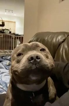 Cute Baby Dogs, Cute Funny Dogs, Cute Dogs And Puppies, Cute Funny Animals, Cute Cats, Doggies, Pitbull Dog Puppy, Smiling Pitbull, Staffy Dog