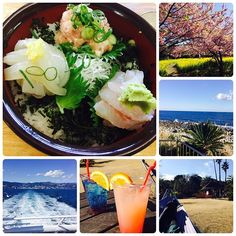 【miyu_shi】さんのInstagramをピンしています。 《2017.2.15 熱海弾丸旅行〜2日目〜 朝からおいしい朝食をしっかり食べて、いざ初島へ⛴ さくらがキレイに咲いていて、一足早く春の気分🌸 この時期、とくに平日はすごく空いているらしく、ハンモックに揺られながらゆっくりした時間を過ごしましたとさ☺️ 初島の人も、熱海の人も、気さくに話してくれる人が多くて、都会と違った良さも感じました〜。 . #初島 #桜 #海 #sea #ハンモック #観光 #癒し》