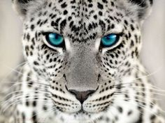 blue eyes watching