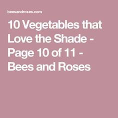 10 Vegetables that Love the Shade - Page 10 of 11 - Bees and Roses