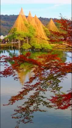Yukitsuri, to protect branches  against heavy snow, and Red foliage at the Kenroku Garden, Kanazawa, Japan
