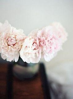 Peony roses.. My Fav