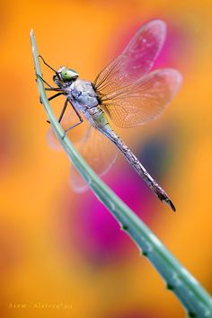 Colorful Dragonfly by Asem Alateeq on 500px