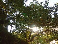 おはようございます☆暑さ寒さも彼岸まで。過ごしやすい神戸の朝を迎えました。朝日浴び葉っぱも徐々に秋色へ♪The morning leaves gradually gonna autumn♪素敵な週末を迎えましょう♪今日も元気に営業中♡