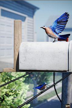 #bluebird #nature #animal #animation #gamedev #gameart #UE4 #unrealengine #unity 3d Assets, Unreal Engine, Blue Bird, Unity, This Is Us, Animation, Studio, Nature, Animals