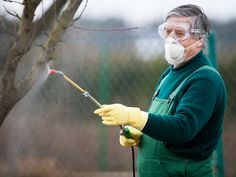 There are two types of diseases that can affect trees. If you think your trees are affected, contact Great Northern Regreenery for tree disease control. Peach Tree Care, Peach Trees, Insect Eggs, Insect Pest, How To Kill Bees, Scale Insects, Overwintering, Plant Diseases, Types Of Fruit