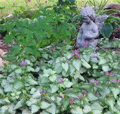 gartenideen mit schattigen pflanzen