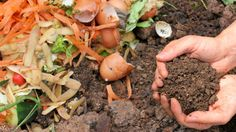 Composting Council Forms Partnership to Address Food Waste, Senior Hunger | Composting content from Waste360