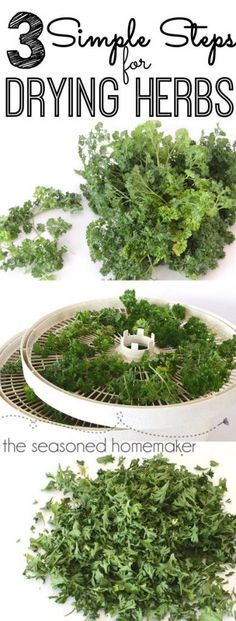 How to Dry Herbs Herbs are easy to grow, easy to dry, and can be used for months. Here are 3 simples steps on how to dry herbs. - The Seasoned Homemaker Healing Herbs, Medicinal Plants, Organic Gardening, Gardening Tips, Vegetable Gardening, Container Gardening, Flower Gardening, Culture D'herbes, Potager Bio