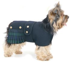 dog kilt MOST IMPORTANT SO PENNY LOOKS HER BEST!!!!