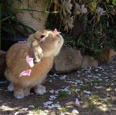 "grumpybrat: ""omgbunnyrabbits: "" Pretty bunny playing with flower petals. "" """