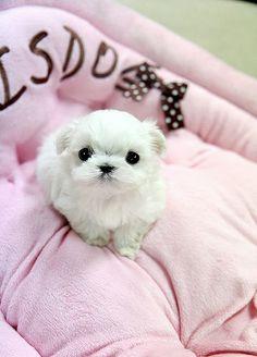 Aww a little puppy