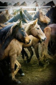 Horses - I knew when I saw this that it was a Ree Drummond (Pioneer Woman) photograph.  Lovely.