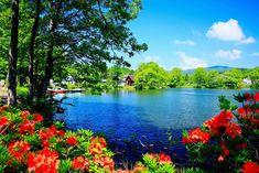 Imagenes Gratis Para Facebook ¡ Que IMG !: Lago azul y hermoso paisaje tropical con flores silvestres