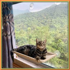 (paid link) For rent. SEARCH NOW save SEARCH. Cat hammock - Found every Categories #cathammock