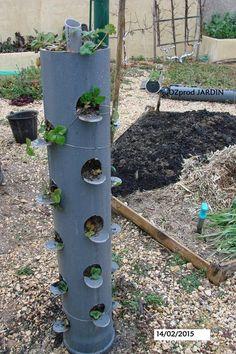 Le jardin vertical aux fraises canalisation de recuperation. Je m'y interesse fortement