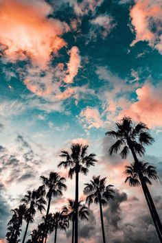 blue sky with clouds, tall palm trees, aesthetic iphone wallpaper Tumblr Wallpaper, Wallpaper Backgrounds, Iphone Backgrounds, Tree Wallpaper, Cute Backgrounds For Phones, Wallpaper Quotes, Drawing Wallpaper, Wallpaper Ideas, Summer Backgrounds Tumblr