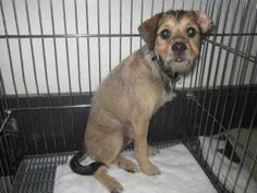SKITTS - ID#A027703  My name is SKITTS.  I am a male, brown Terrier mix.  The shelter staff think I am about 7 months old.  I have been at the shelter since Apr 12, 2014.  This information was refreshed 39 minutes ago and may not represent all of the animals at the Redlands Animal Control.