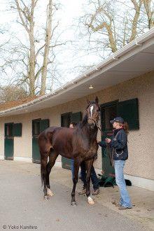 アガ・カーンスタッド・ギルタウンの繁殖牝馬厩舎に到着した、VODKA(ウオッカ)