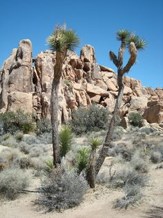 The Rugged Palm Springs – California,