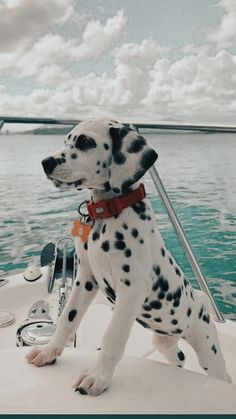 Super Cute Puppies, Baby Animals Super Cute, Cute Baby Dogs, Cute Little Puppies, Cute Dogs And Puppies, Cute Little Animals, Cute Funny Animals, Doggies, Puppies Puppies